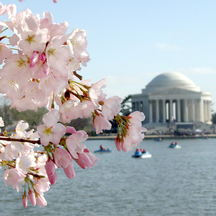 November 26th 2020 – Destination DC. Cherry Blossom Festival Update, Banneker Opening, Ford Theatre Virtual Events & New National Native American Veterans Memorial