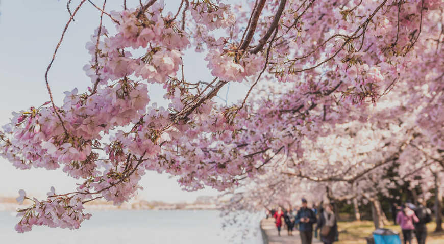 March 18th 2021 – Destination DC – Spring Brings Blossoms, Outdoor Opportunities & More to Washington, DC